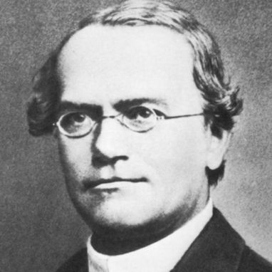 20 de Julho - Gregor Mendel, monge e cientista austríaco, pioneiro da genética