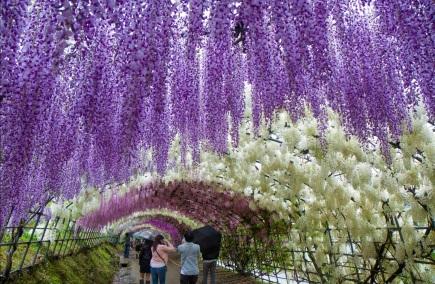 22 de Setembro – Primavera no corredor de flores japonês.