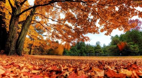 20 de Março - Outono no hemisfério Sul
