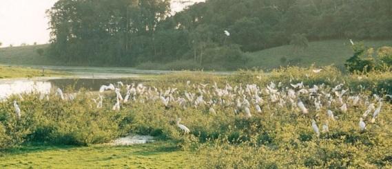12 de Maio - Açúde das garças - Paraíso do Sul - Rio Grande do Sul.