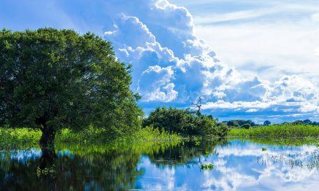8 de Abril - Paisagem típica do Pantanal em Mato Grosso.