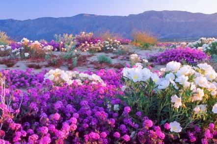 22 de Setembro – Primavera de flores.