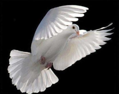 1-de-janeiro-dia-mundial-da-paz