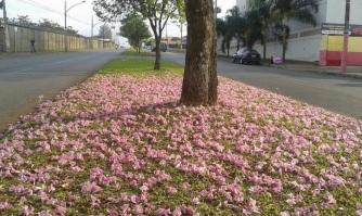 20 de Março - Outono, hemisfério Sul