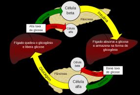 15 de Abril - Regulação da glicémia pela hormonas glucagina e insulina