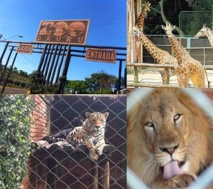 1 de Agosto – Parque Zoológico Municipal — Bauru (SP) — 121 Anos em 2017.
