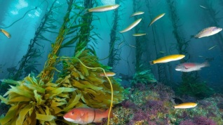 16 de Julho - 1926 – A revista National Geographic publica as primeiras fotos coloridas do fundo do mar.