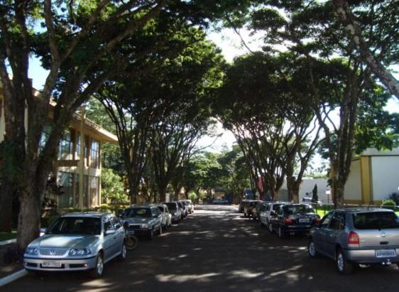 6 de maio - Ruas arborizadas em Mandaguari, Paraná.