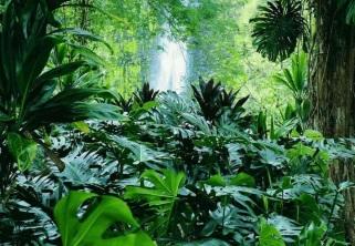 1 de Maio - 1753 — Publicação da Species Plantarum por Linnaeus e início formal da taxonomia vegetal